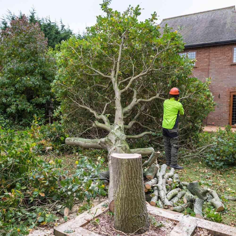 Tree felling Kings Langley