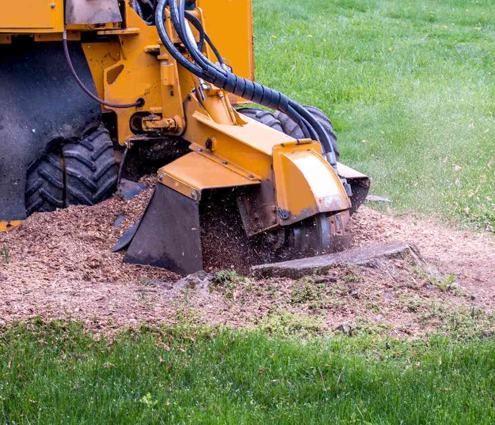 Tree stump grinding in Berkshire