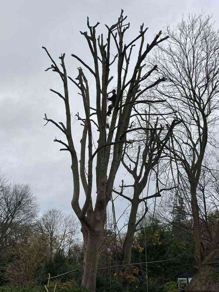 Tree Surgeon in High Wycombe